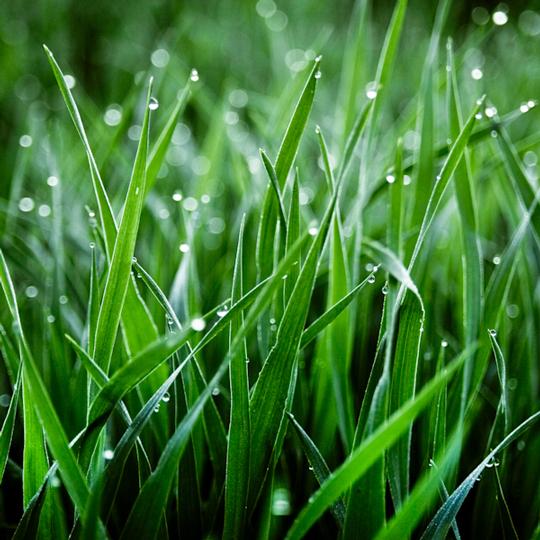 Green & Wet
