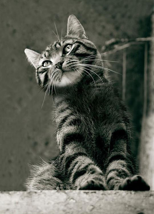 Street cat by (dream-traveler)