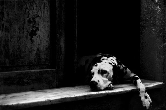 Tired Dog by João M.