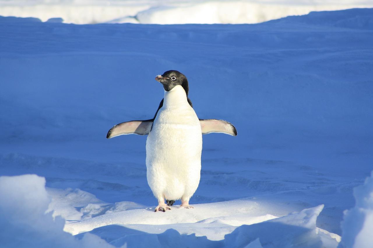 penguin free image